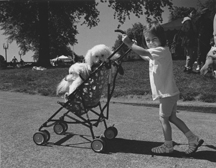 Girl With Dogs In Stroller